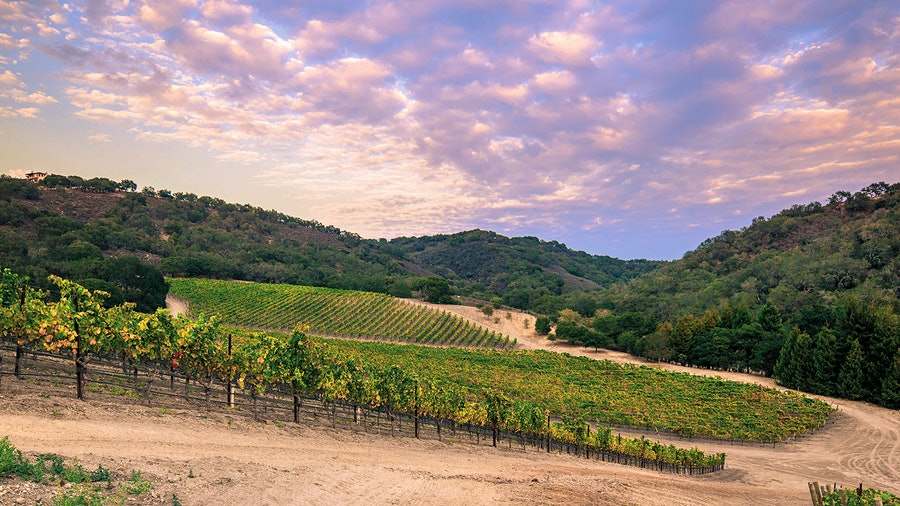 Talley's estate vineyard in the cool-climate Arroyo Grande Valley is an ideal location for growing Chardonnay.