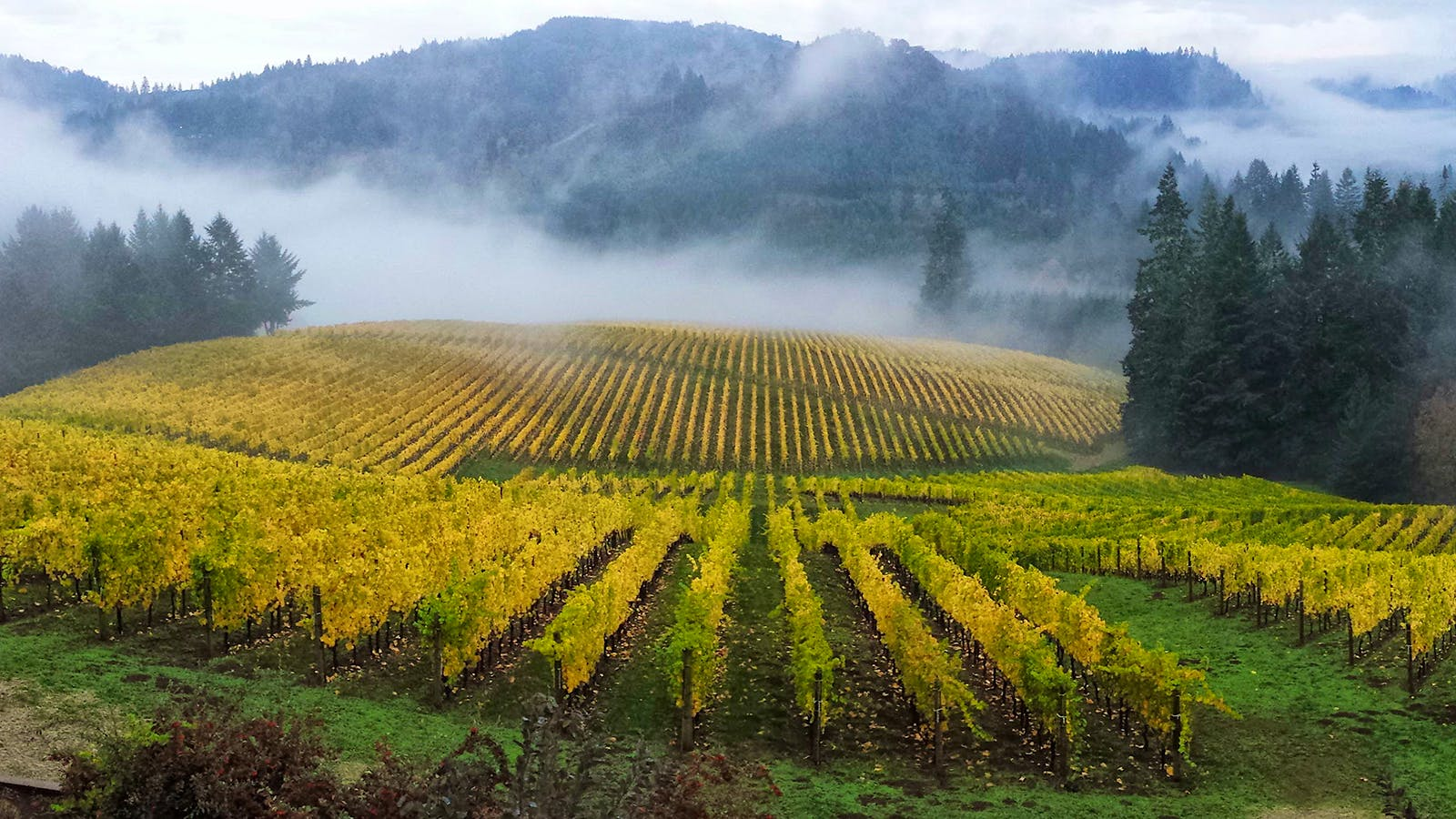 11 Outstanding Oregon Pinot Noirs