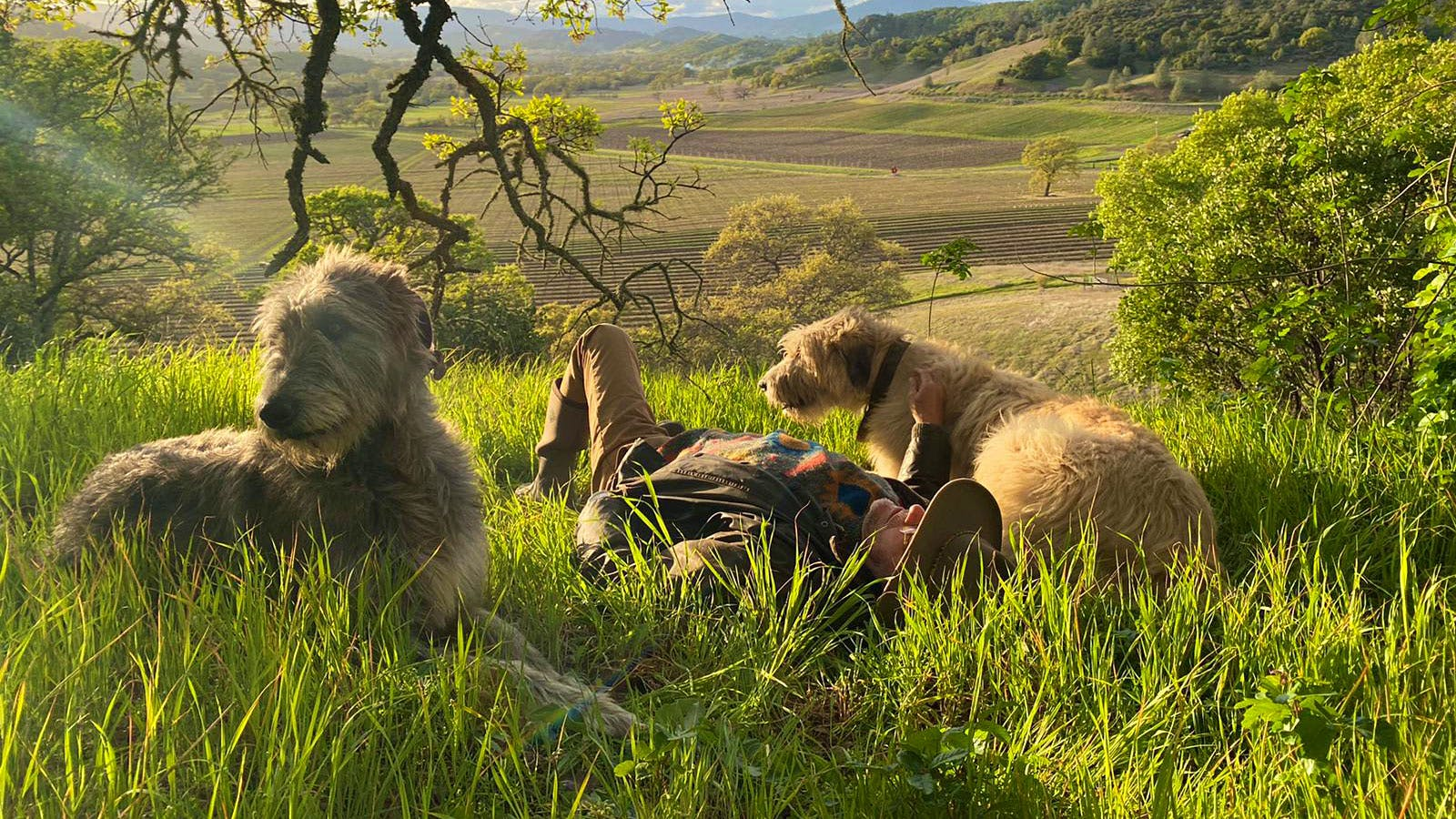 Lir and Finn the Irish Wolfhounds