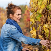 French viticultural engineer Agnès Destrac-Irvine examines vines in an experimental vineyard just outside the city of Bordeaux.Bordeaux Adapts with New Grapes