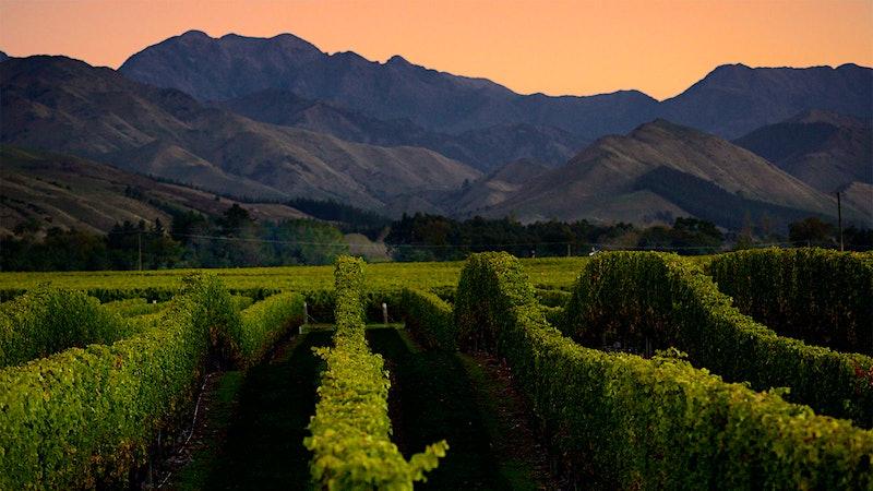 8 New Zealand Sauvignon Blancs Under $20