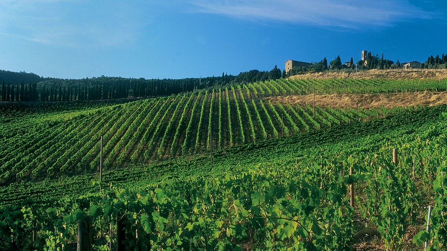A vineyard on a hill with an old building in the distance