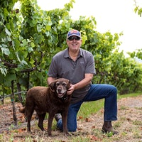 Bristol, a Labrador Retriever, in Frank Family Vineyard with owner Todd GraffGallery of Readers' Dogs: 880+ Photos!