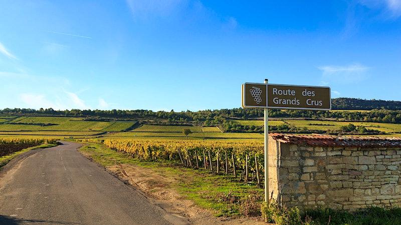 Quiz: Top Vineyards Worldwide