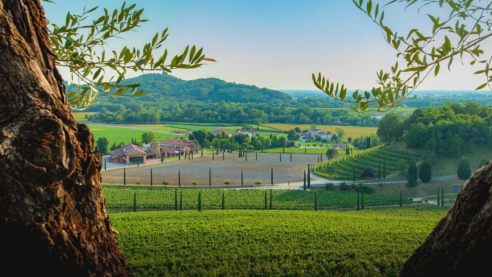 Italy's Antinori Buys Majority Stake in Friuli Winery Jermann