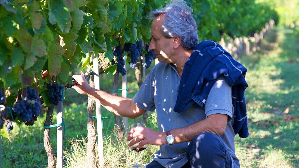Southern Italy's Wine Professor