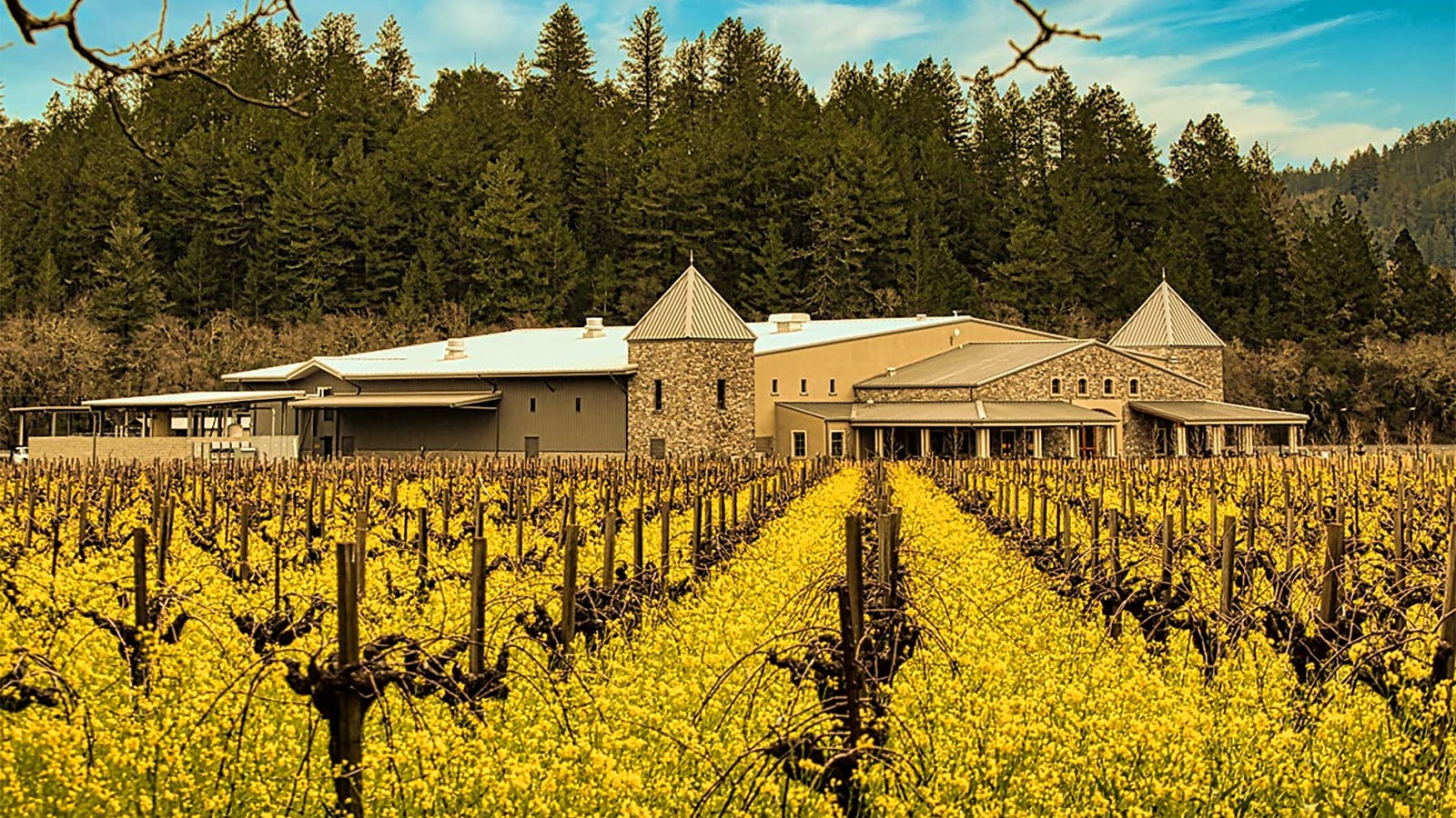 11 Enticing Napa Cabernet Sauvignons for $50 or Less