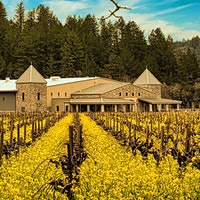 Girard has been based in Calistoga since 2018, but the winery uses Cabernet grapes from several Napa Valley subregions.11 Enticing Napa Cabernet Sauvignons for $50 or Less