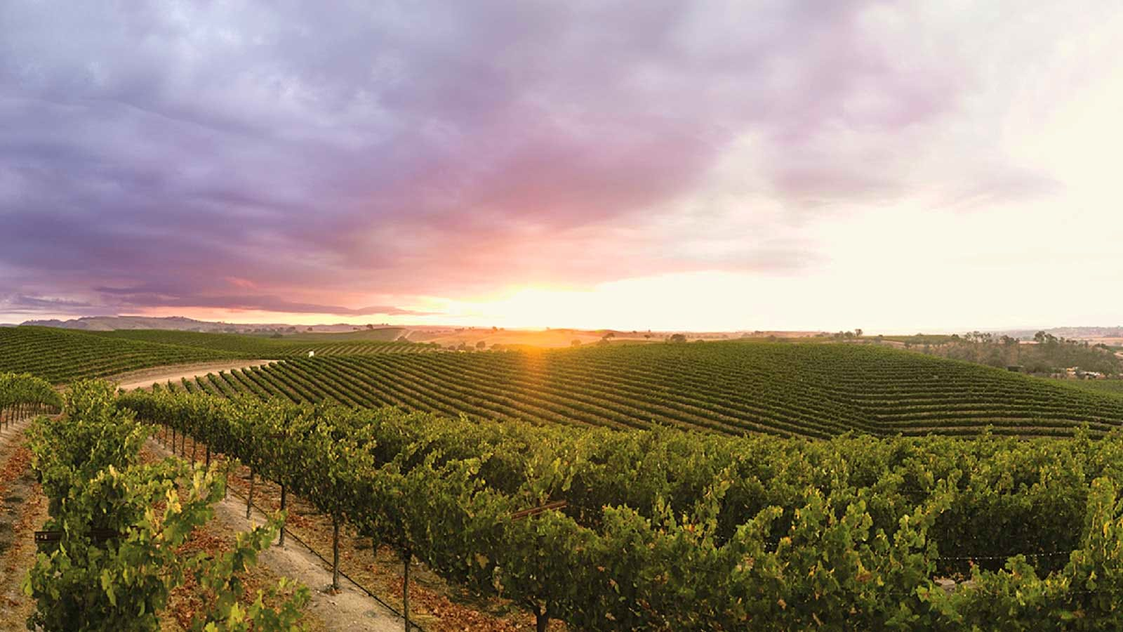 13 California Value Reds Up to 91 points
