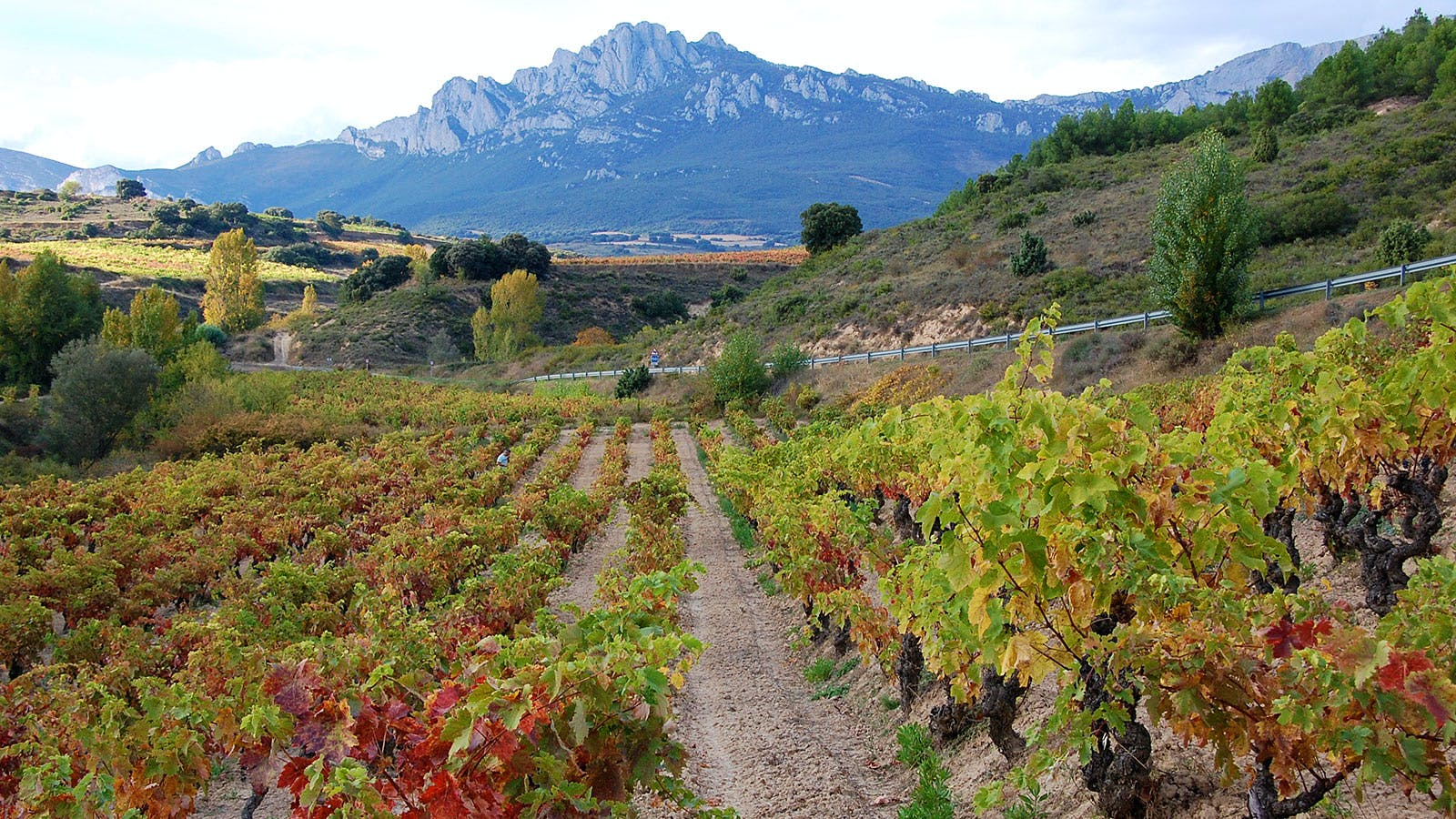 8 Thrilling Rioja Values Up to 90 Points