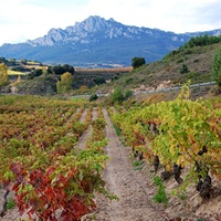In addition to impressive red and white wines, Rioja offers picturesque views of rolling hills, ancient villages and old vines.8 Thrilling Rioja Values Up to 90 Points