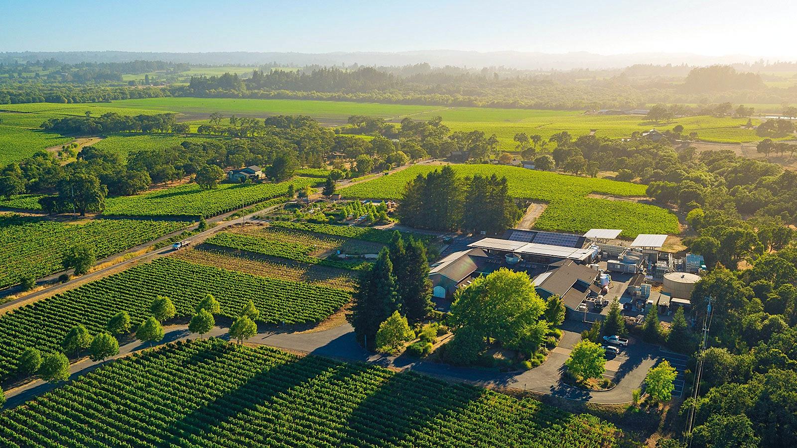 Aerialimage of Loach Vineyards