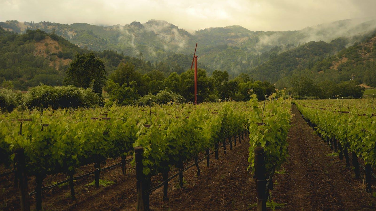 Serious <em>Grands Vins</em> on the Horizon from Eisele Vineyard