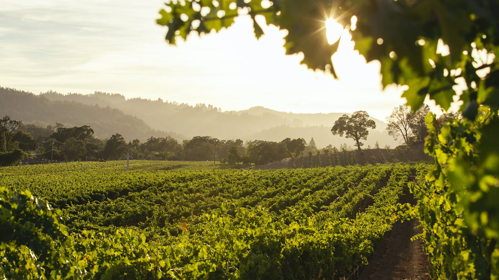 Kenefick Ranch's Calistoga Cabernets Demand a Closer Look