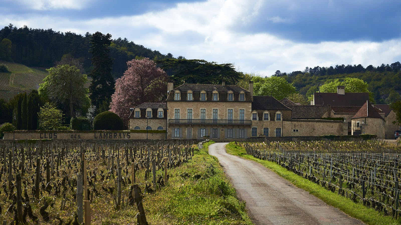 Discovering the Secrets of Clos des Lambrays
