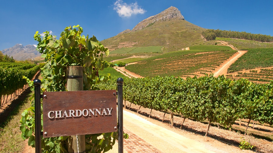 """A Chardonnay vineyard in South Africa near a hill and a sign that reads """"Chardonnay"""""""