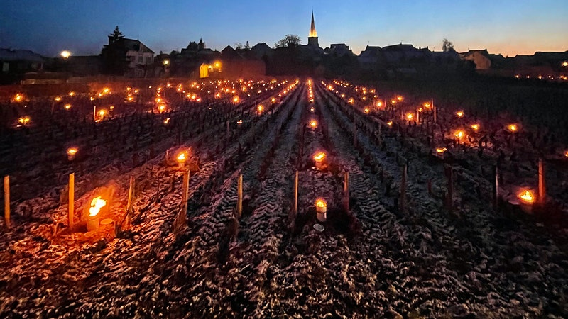 Severe April Frost Damages Budding Vines in France
