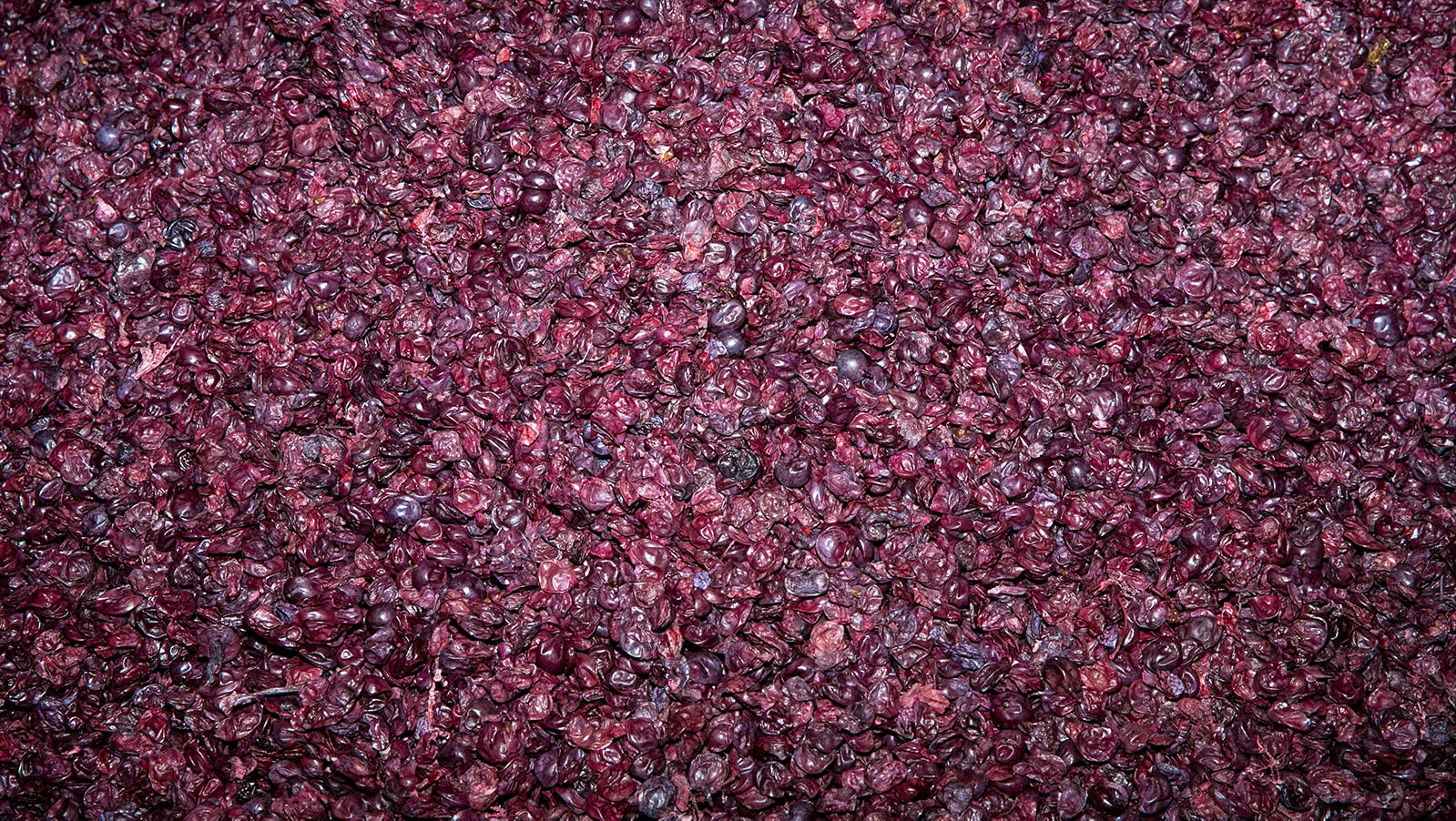 A Second Life for Winemaking's Leftover Grape Skins