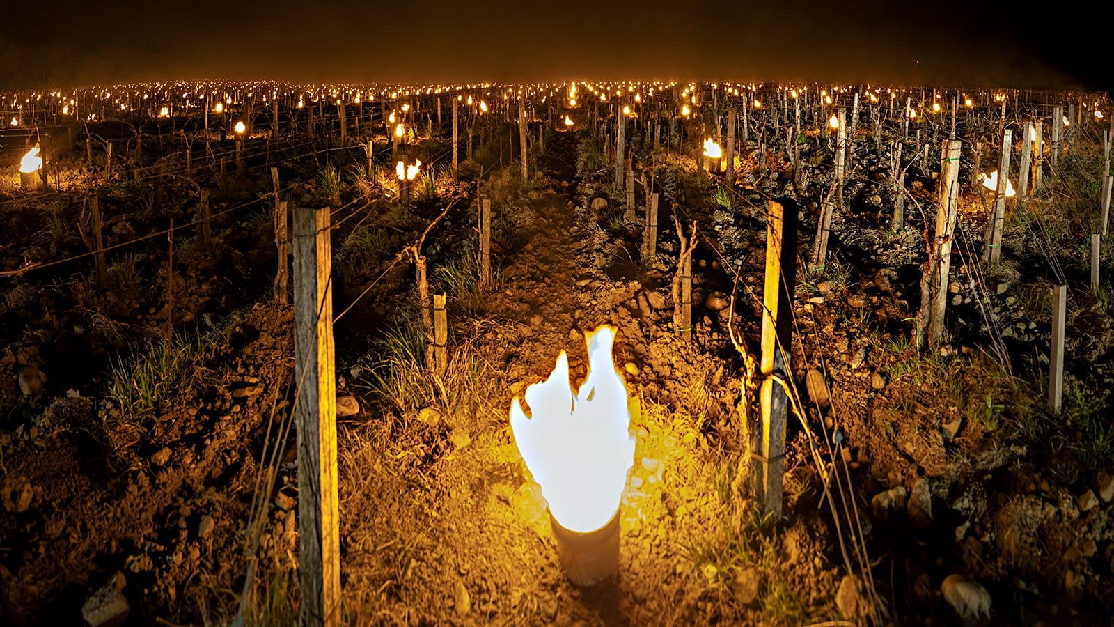 Frost Strikes Vineyards in Leading Italian Wine Regions