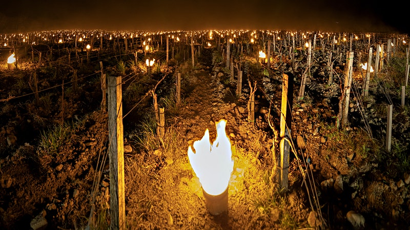 Frost Strikes Vineyards in Leading Italian Wine Regions