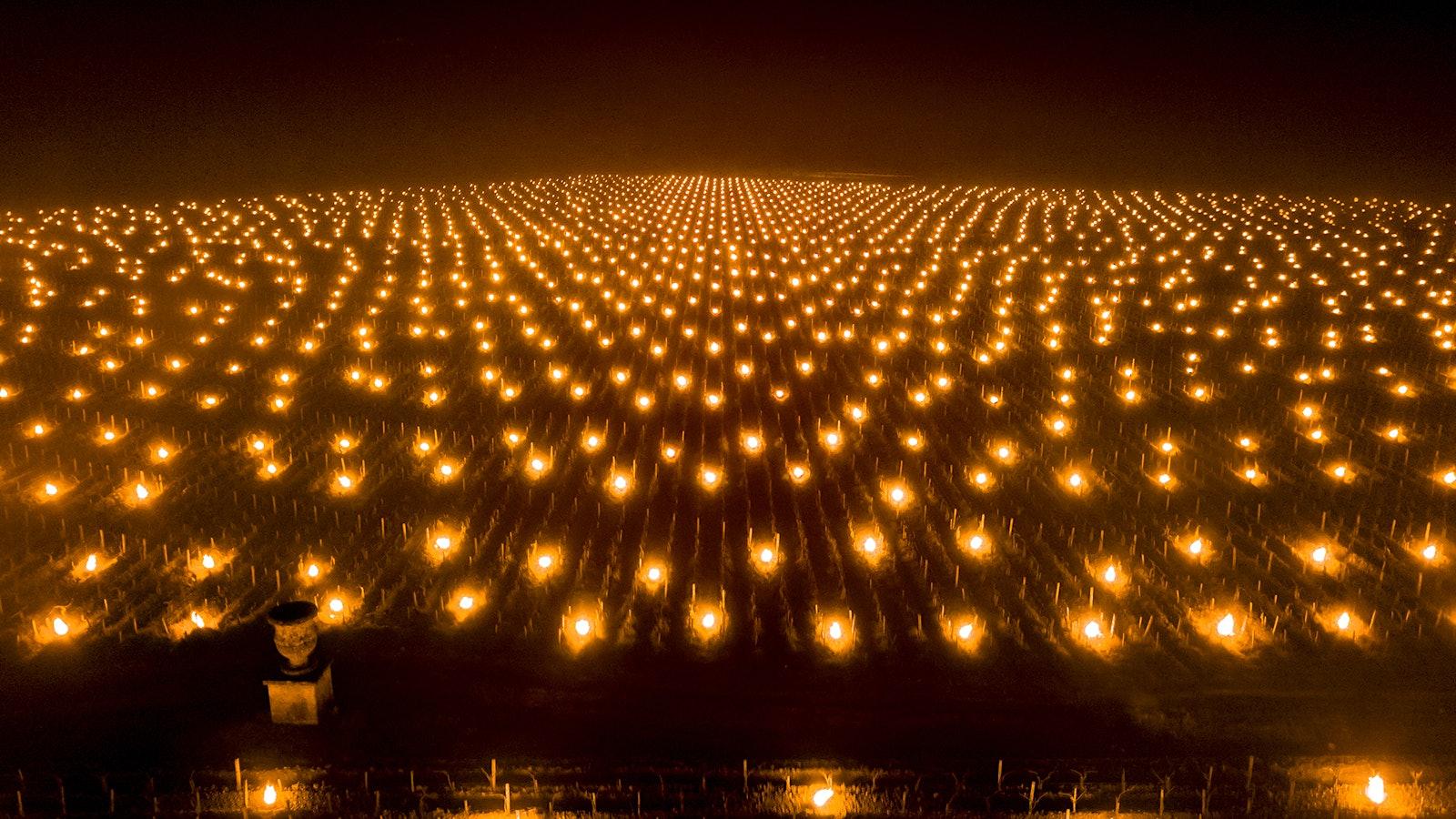 Vineyard Lights