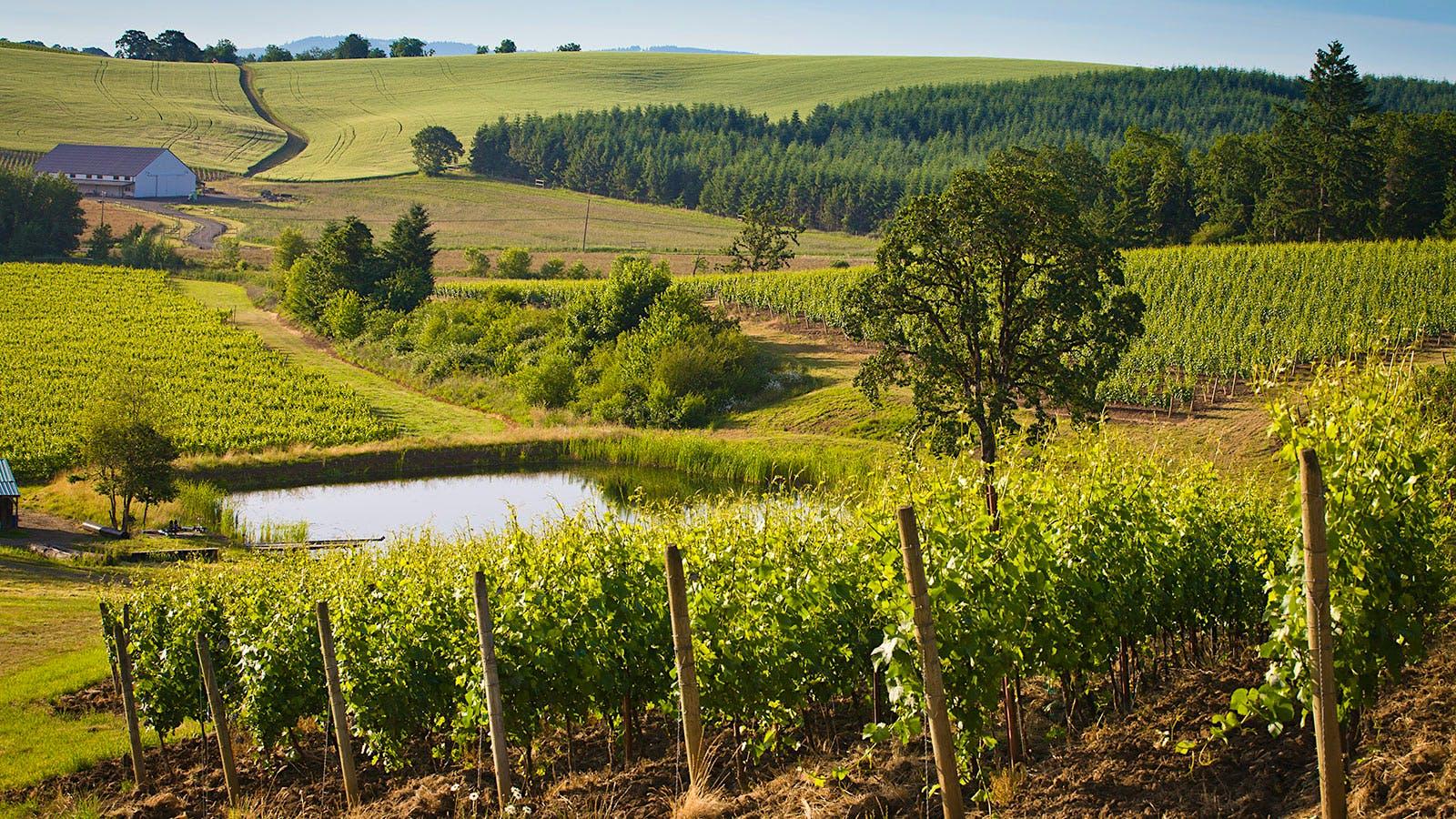 12 Vibrant White Wines from Oregon and Washington