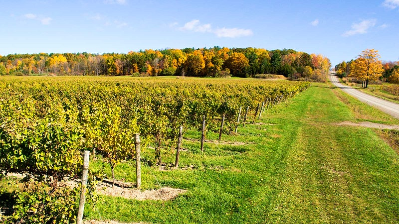 11 Vibrant Finger Lakes Rieslings Up to 92 Points