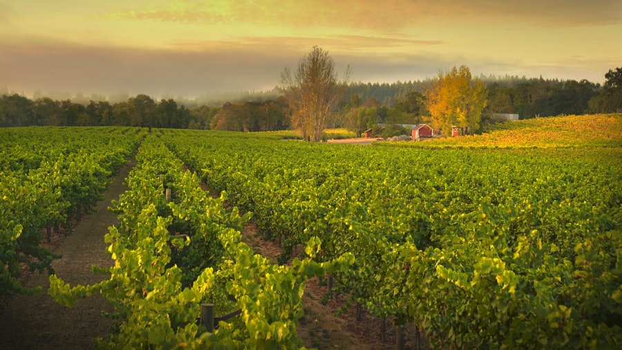 Ramey's Westside Farms estate vineyard is a primary source for the winery's Russian River Valley Chardonnay.