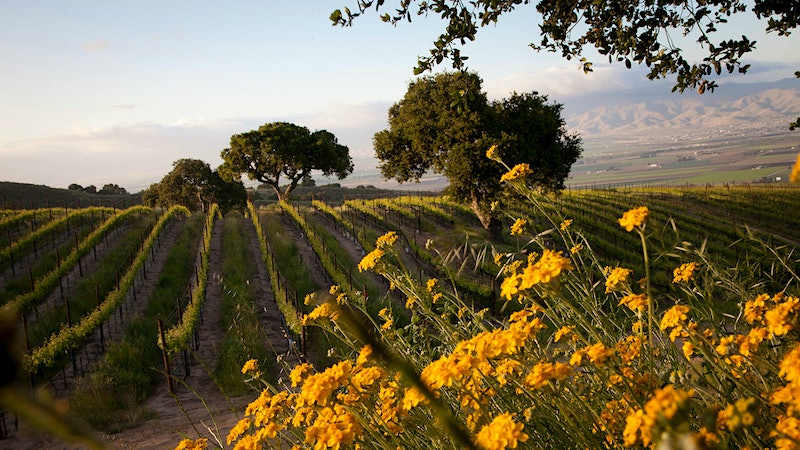 12 Outstanding California Wines for Mother's Day