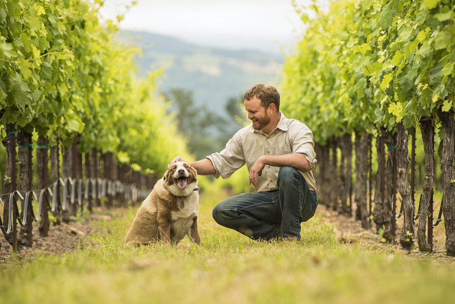 Willie, an Australian Shepherd mix, sitting in a St. Francis vineyard with owner Jake Terrell