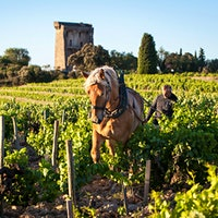A horse plowing among the vines in front of France's Domaine de Beaurenard96-Point Châteauneufs, Dynamic Cabernets and Stylish Chardonnays