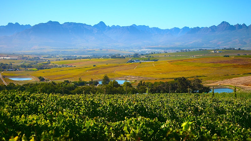 10 Thrilling South African Whites Under $20