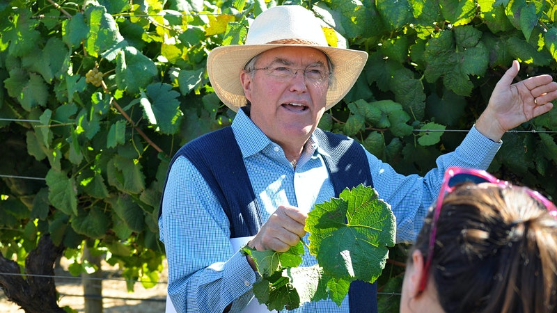 A Legend of the Vineyard