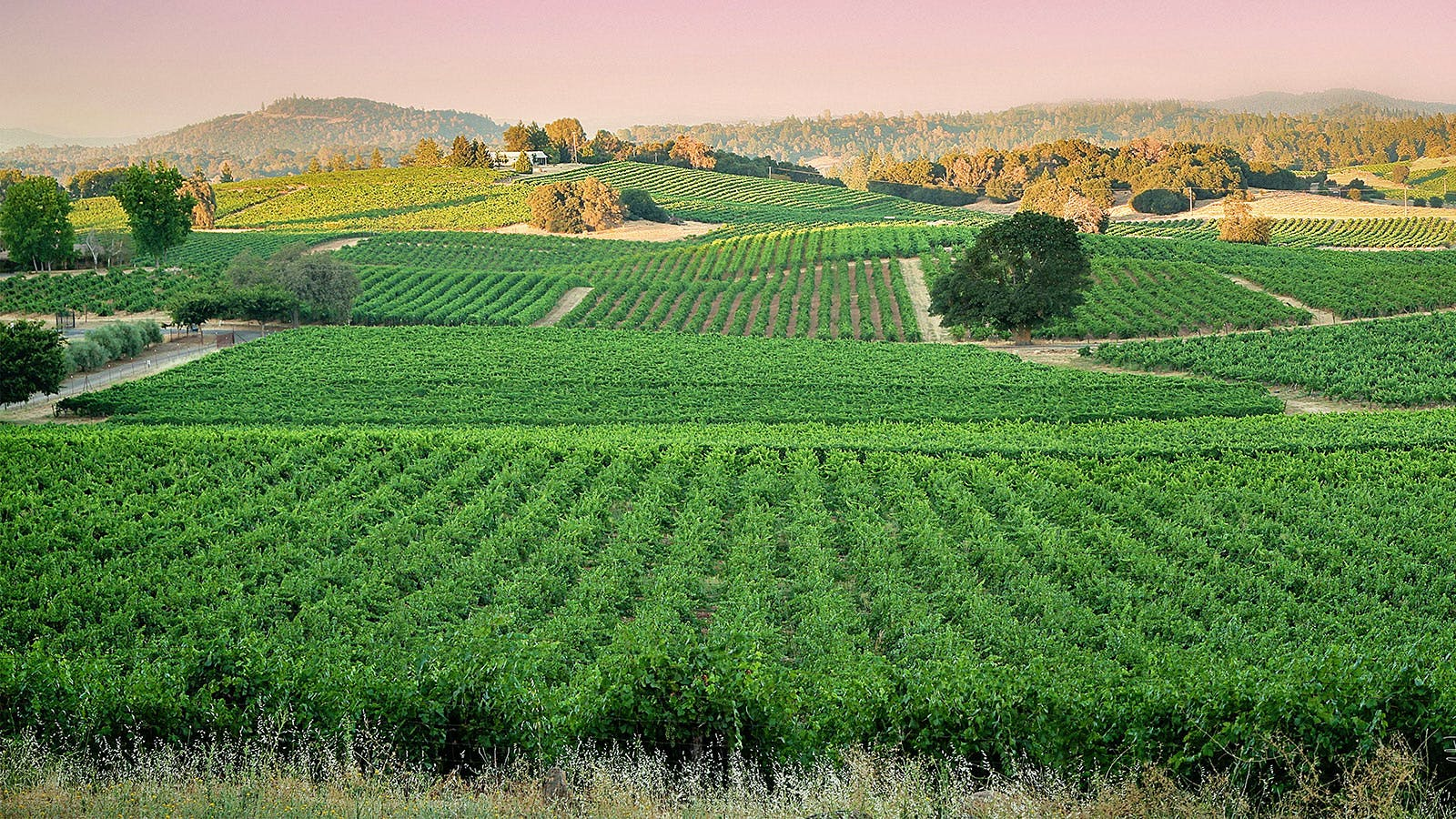 10 Enchanting California Sauvignon Blancs Up to 92 Points