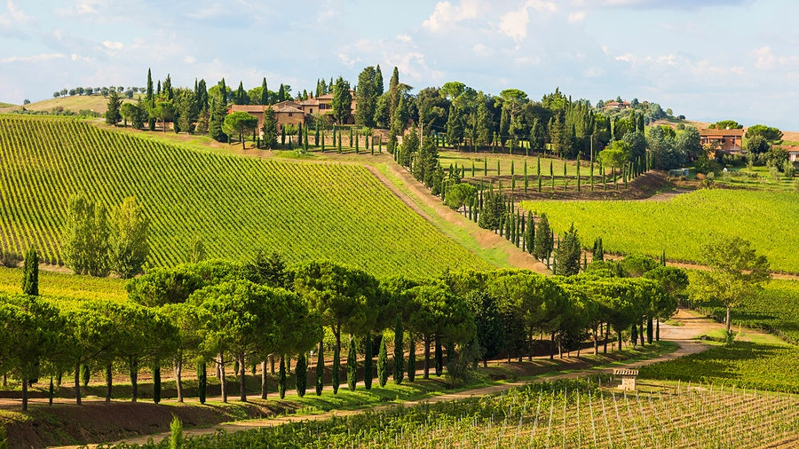 Tuscan winery Carpineto makes wine from estates in Montepulciano, Montalcino, Chianti Classico and Maremma, including its white and rosé Dogajolo bottlings.