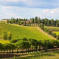 Tuscan winery Carpineto makes wine from estates in Montepulciano, Montalcino, Chianti Classico and Maremma, including its white and rosé Dogajolo bottlings.9 Diverse Tuscan Values Under $20