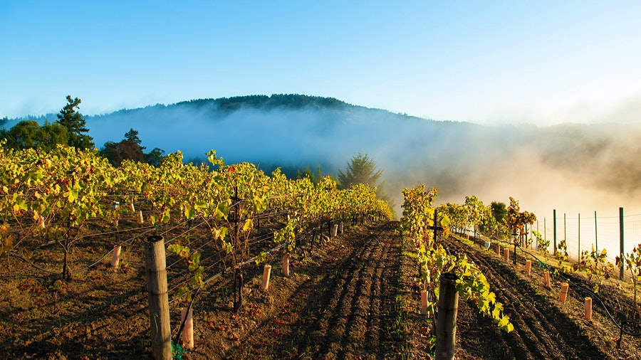Napa Valley–based winery Failla focuses on cooler-climate vineyard sites for its wines, including its Sonoma Coast Pinot Noir.