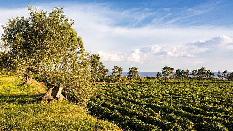8 Thrilling Sicilian Wines for $25 or Less