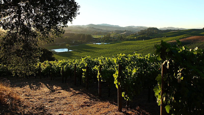 12 Exciting Napa and Sonoma Cabernets for $50 or Less