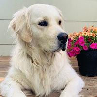 Portrait of Ellie, an Australian Shepherd, in front of a pumpkin displayGallery of Readers' Dogs: 1,400+ Photos!