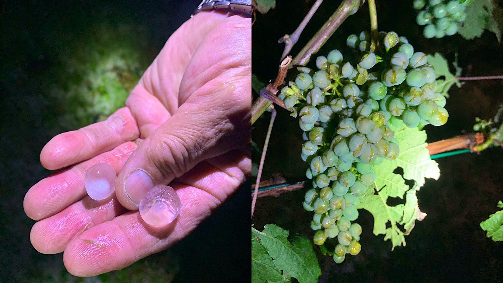 Violent Storms Rip Through Italy's Gattinara Region, Pelting Vines with Hail