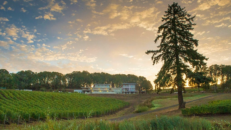 10 Stunning West Coast White Wines at 90+ Points