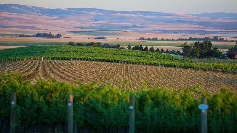 10 Outstanding Washington Cabernets for $30 or Less