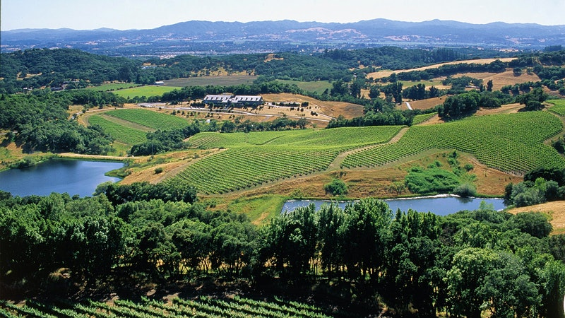 12 Diverse and Delightful Sonoma Wines