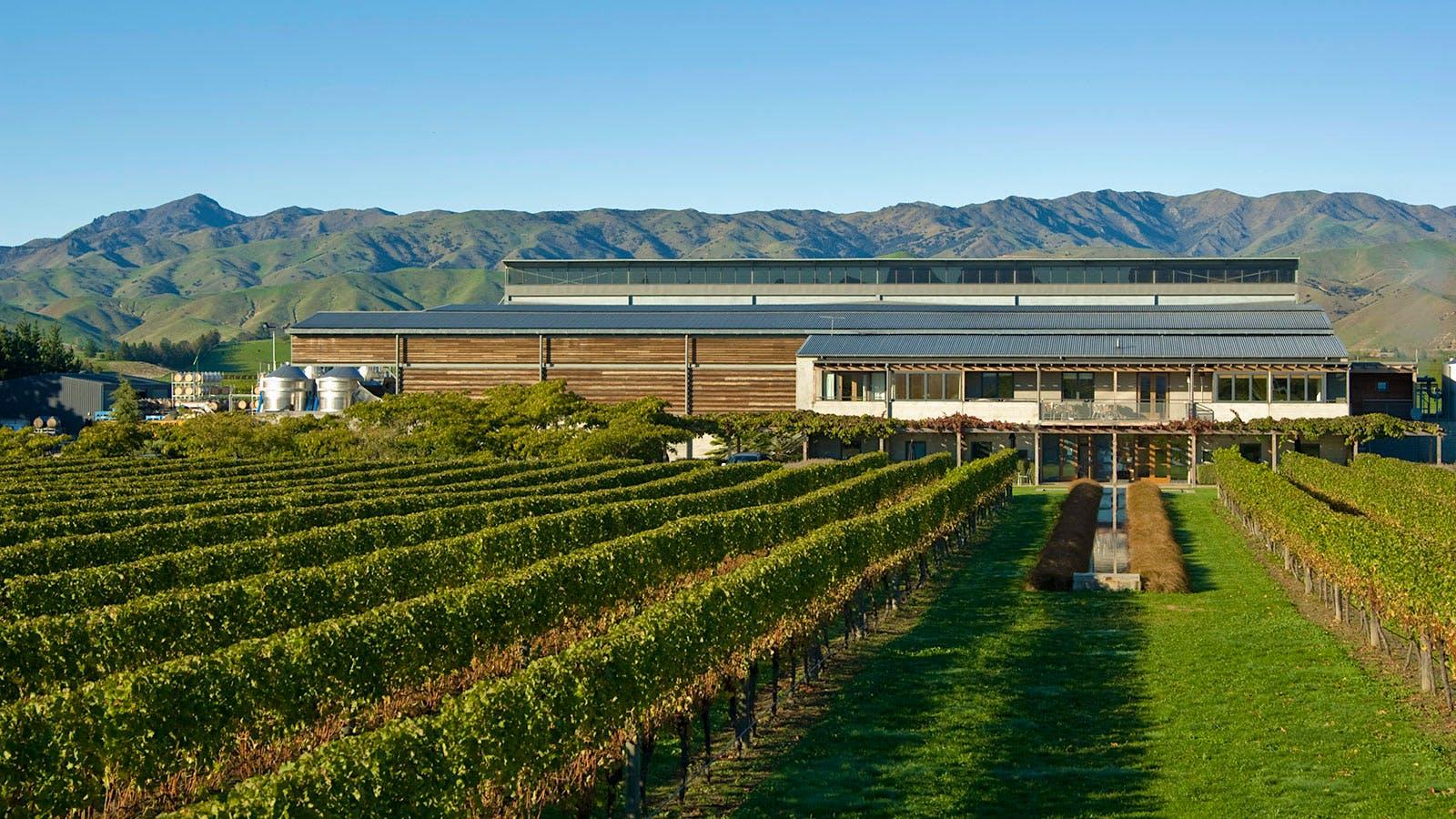 8 Lively Marlborough Sauvignon Blancs Under $20