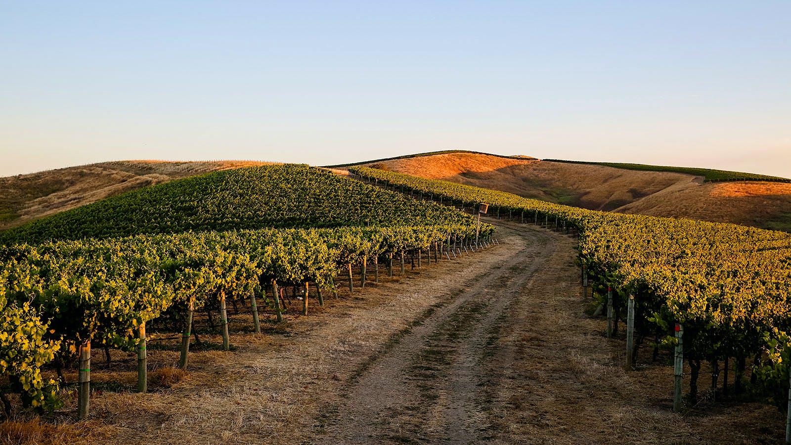 8 Thrilling California Sauvignon Blancs Under $20