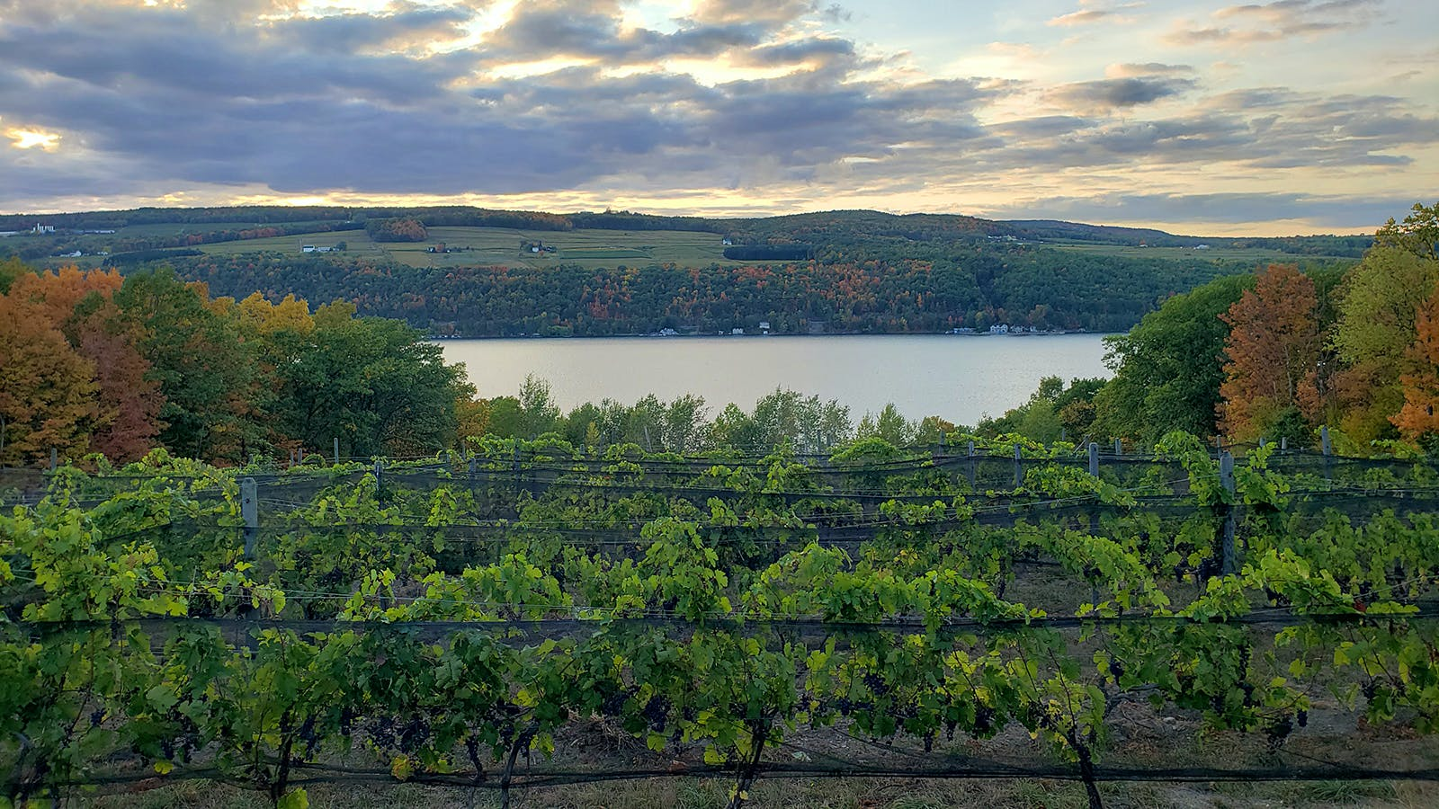 8 Alluring Finger Lakes Rieslings for $20 or Less