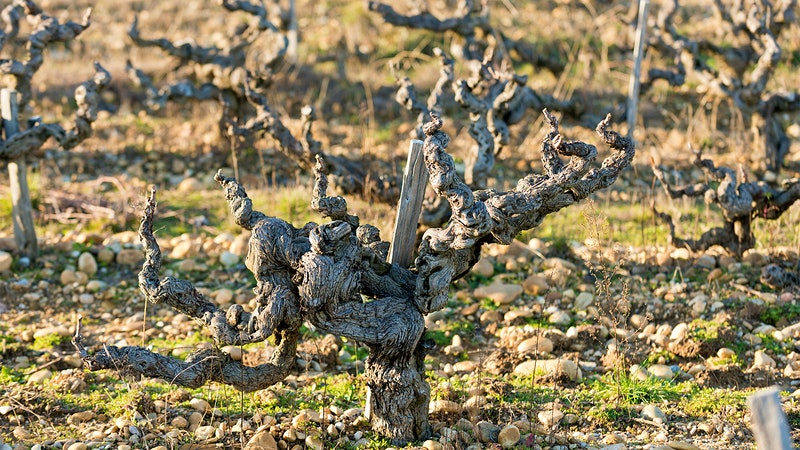 8 Delicious Southern Rhône Reds for $25 or Less