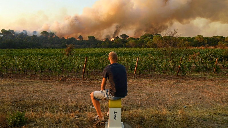 Provence Winemakers Return Home to Charred Vines and Fears of Smoke Taint