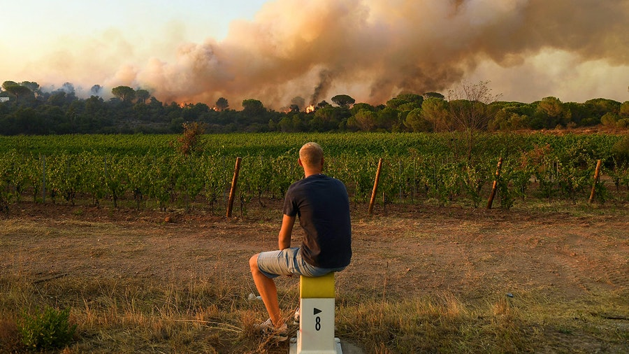 Smoke drifted over thousands of acres of vines, leaving vintners wondering if their grapes will develop smoke taint.